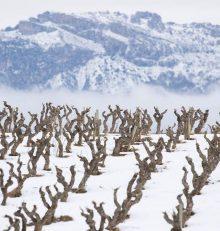 Snow makes the Rioja Alta Wine Route even more beautiful