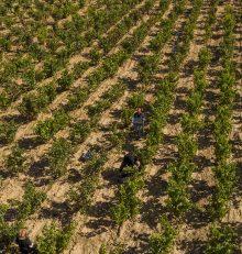 Vendimia en la Ruta del Vino Rioja Alta, imágenes que grabarás para siempre