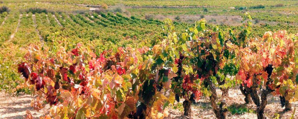 La Rioja, en el punto de mira del enoturismo internacional